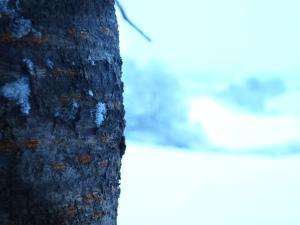 winter-a2014-2015